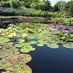 Foto de Garfield Park Conservatory