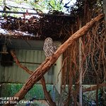 Featherdale Wildlife Park resmi