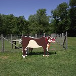 MA - DARTMOUTH - ALDERBROOK FARM – CUT-OUT COW