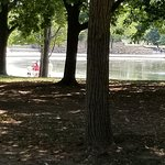 Another view of the National Mall tree and shaded area