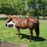 MA - DARTMOUTH - ALDERBROOK FARM – HORSE #1