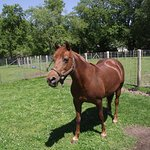 MA - DARTMOUTH - ALDERBROOK FARM – HORSE #2