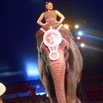 Φωτογραφία: Circus World