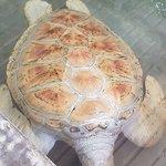 Bild från Turtle Hatchery Hikkaduwa