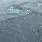 View of a Malestrom from the Saltstraumen Bridge