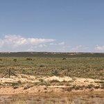 Cameron, AZ.  Wild horses