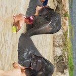 mud bath time with the elephants