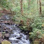 صورة فوتوغرافية لـ Bridal Veil Falls State Park