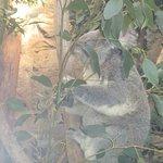 Photo of WILD LIFE Sydney Zoo