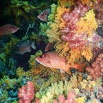 Foto de Tubbataha Reef