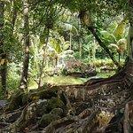 Photo of Elephant Cave Ubud