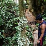 Foto van Alex Ketambe Trekking