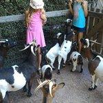 Photo de Zoo de Champrepus