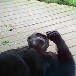 Foto de Erlebnis Zoo Hannover