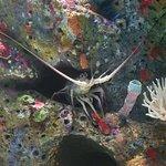 テキサス州立水族館の写真