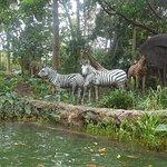 Safari Ride at the Tarzan and Jane area