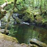 Glengarriff Nature Reserve照片