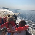 Billede af Panama City Beach Dolphin Tours & More