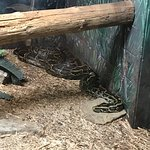 Foto Oglebay Park Good Zoo