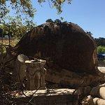 Фотография Hippocrates Tree