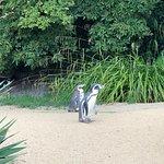 Photo de Dublin Zoo