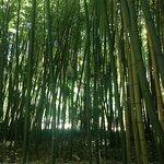 Photo of La Bambouseraie en Cevennes