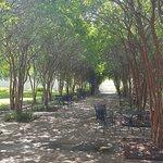 Trees Outside Visitor Center