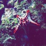 Oceanopolis Foto