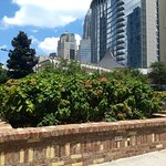 Romare Bearden Park-garden