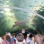 360 degree fish