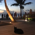 Ocean Club Cabana Bar & Grill의 사진