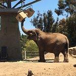 Elephant exhibit at San Diego Zoo.