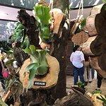 Foto de Jardin Botanico de Medellin