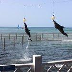 Delfinario de Cienfuegos Foto