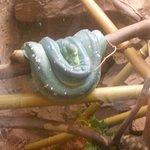 Foto Peoria Zoo