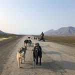 ภาพถ่ายของ Svalbard Husky