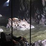 Foto de Sea Lion Caves