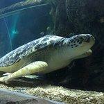 Photo of Sea Life Aquarium
