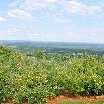 Carter Mountain Orchard의 사진