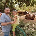 Bild från Safari Park