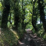 well worn path on the Camino