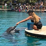 Dolphin Reef Foto