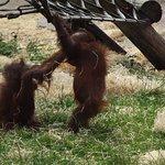 صورة فوتوغرافية لـ Twycross Zoo