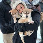 Alaska Sled Dog Tours照片