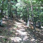 Фотография Parque Natural Hayedo de Tejera Negra