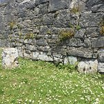 Walls at 7 churches and daisies