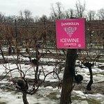 Inniskillin Wines at the Brae Burn Estate의 사진