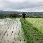 Bali Private Day Tours照片