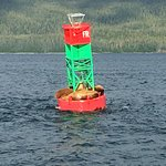 Photo of Juneau Whale Watch