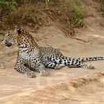 Ceylon Safari Tours Foto